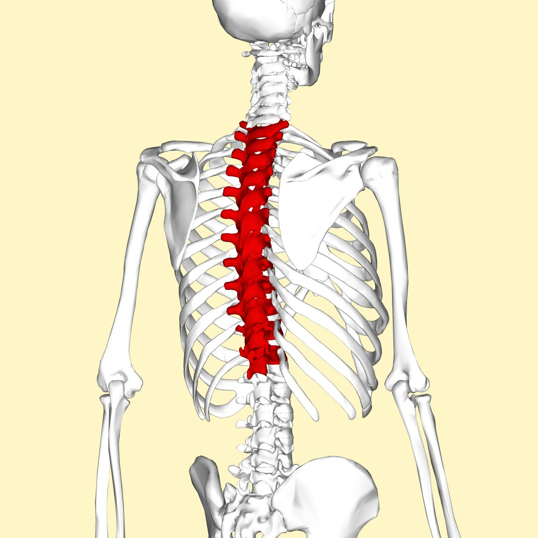 Breaking down the T-Spine